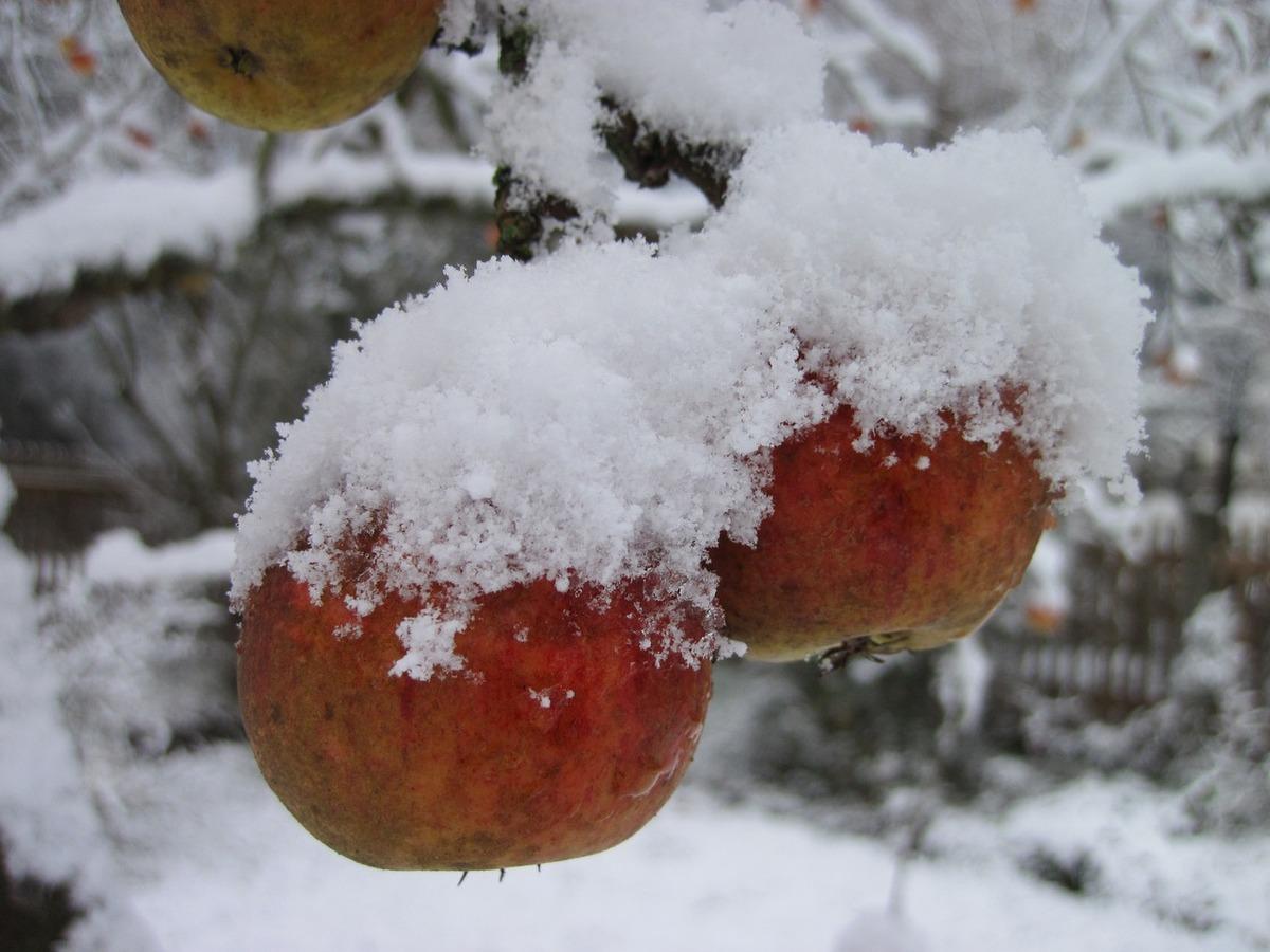 Twelvehundred apple tree 1304850 1280