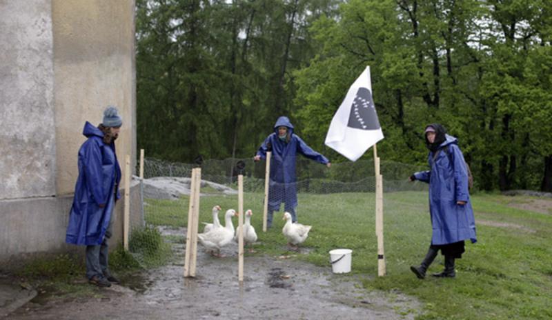 Standard geese big2