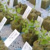 Thumb botanical gardens seeds windowfarms finland shoots 02
