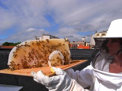 Urban apiary credit annemie maes